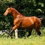 paardinnood-bonny-1