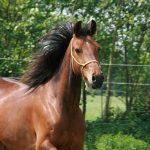 paardinnood-bonny