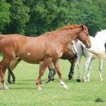 paardinnood-sir-bentley